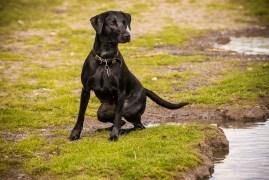 Dog_Photographer_Derbyrshire_AlbertVillage-3