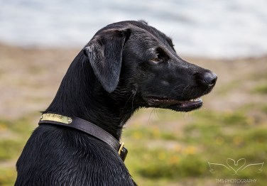 Dog_Photographer_Derbyrshire_AlbertVillage-4