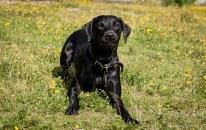 Dog_Photographer_Derbyshire-19