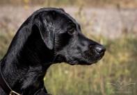 Dog_Photographer_Derbyshire-24