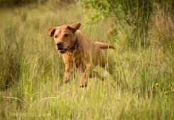 Dog_photographer_Derbyshire-27