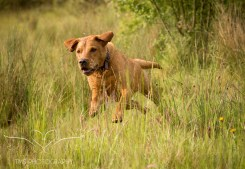 Dog_photographer_Derbyshire-27