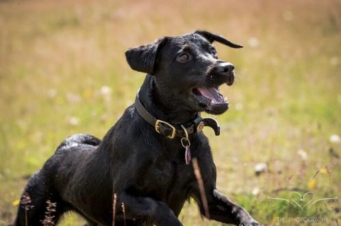Dog_Photographer_Derbyshire-31