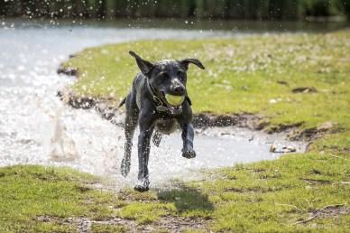 Dog_Photographer_Derbyshire-33