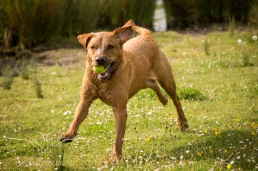 Dog_photographer_Derbyshire-38