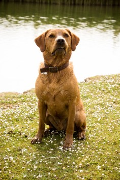 Dog_photographer_Derbyshire-47