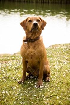 Dog_photographer_Derbyshire-47