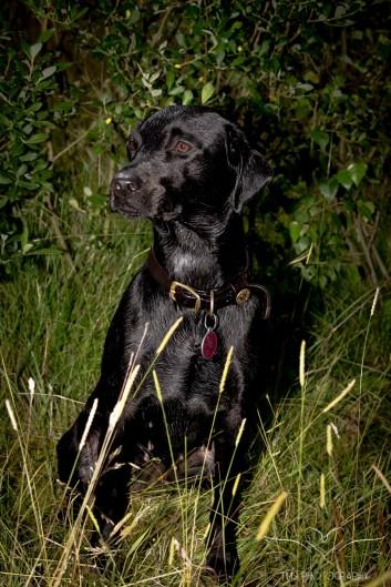 Dog_Photographer_Derbyshire-48