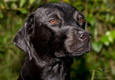 Dog_Photographer_Derbyshire-49