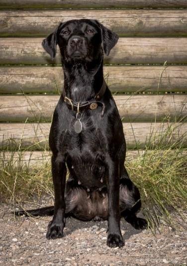 Dog_Photographer_Derbyshire-53