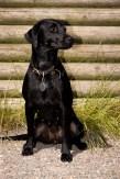Dog_Photographer_Derbyshire-54