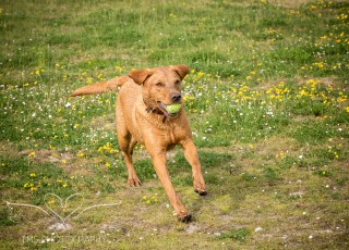 Dog_photographer_Derbyshire-58