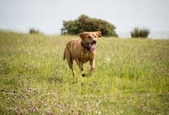 Dog_photographer_Derbyshire-61