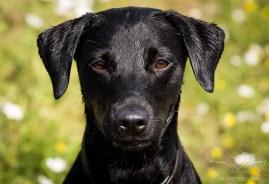Dog_Photographer_Derbyshire-7