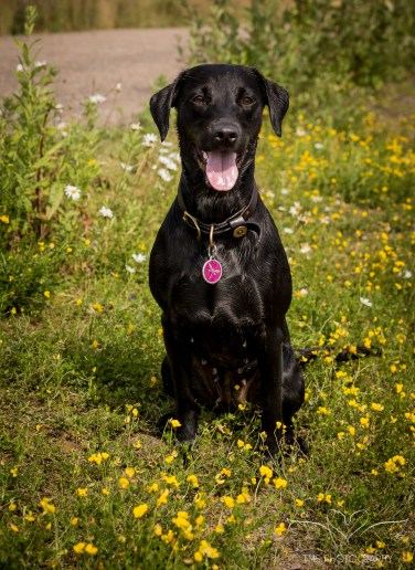 Dog_Photographer_Derbyshire-9
