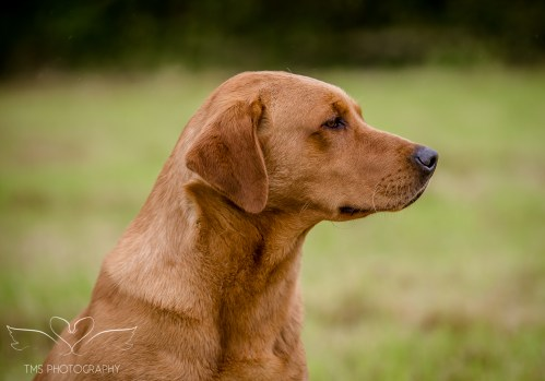 Dog_equine_Photographer_Derbyshire (11 of 74)