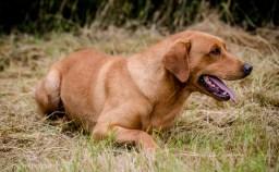 Dog_equine_Photographer_Derbyshire (32 of 74)