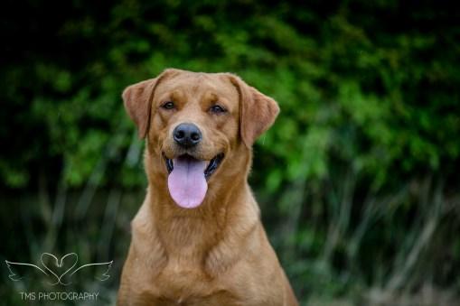 Dog_equine_Photographer_Derbyshire (36 of 74)