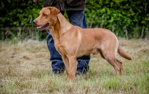 Dog_equine_Photographer_Derbyshire (45 of 74)