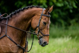 Dog_equine_Photographer_Derbyshire (59 of 74)