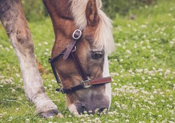 equine_phootgrapher_Staffordshire-58
