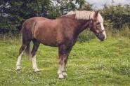 equine_phootgrapher_Staffordshire-65