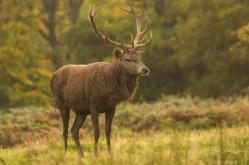 Deer_calkeparkderbyshire-27
