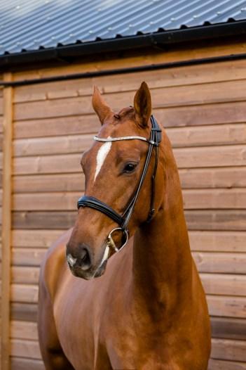 equine_photographyer_derbyshire_-10