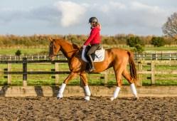 equine_photographyer_derbyshire_-12
