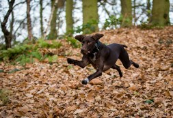 Dog_Photographer_Shropshire-14