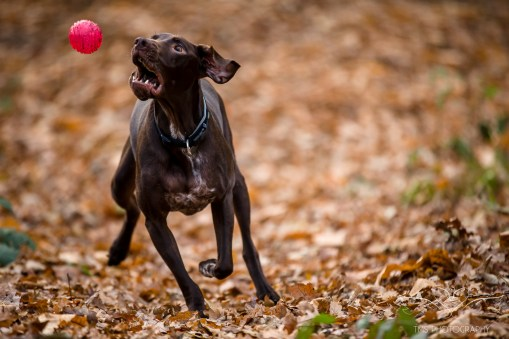 Dog_Photographer_Shropshire-25