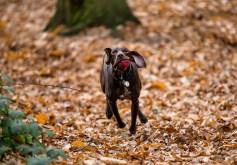 Dog_Photographer_Shropshire-27
