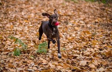 Dog_Photographer_Shropshire-34