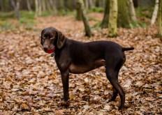 Dog_Photographer_Shropshire-41