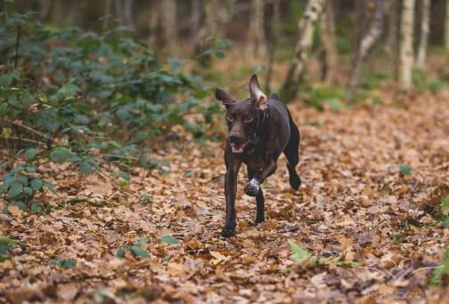 Dog_Photographer_Shropshire-50