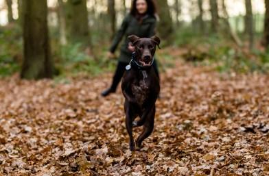 Dog_Photographer_Shropshire-61