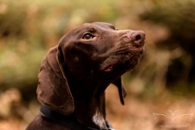 Dog_Photographer_Shropshire-64