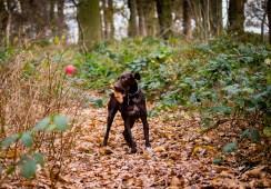 Dog_Photographer_Shropshire-73
