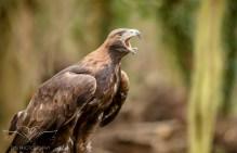 Birdsofprey_photography (30 of 71)