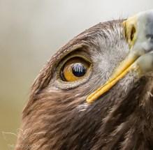 Birdsofprey_photography (32 of 71)