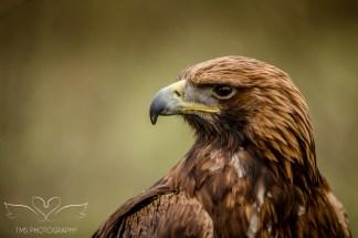 Birdsofprey_photography (39 of 71)