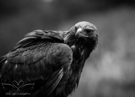Birdsofprey_photography (4 of 71)