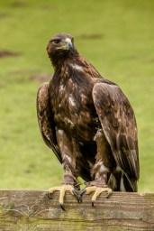 Birdsofprey_photography (43 of 71)
