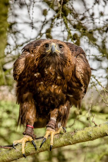 Birdsofprey_photography (45 of 71)