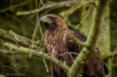 Birdsofprey_photography (48 of 71)