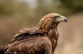 Birdsofprey_photography (5 of 71)