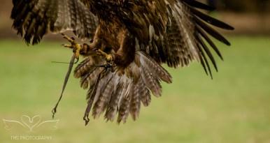 Birdsofprey_photography (55 of 71)