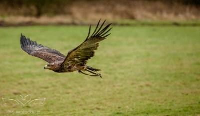 Birdsofprey_photography (58 of 71)