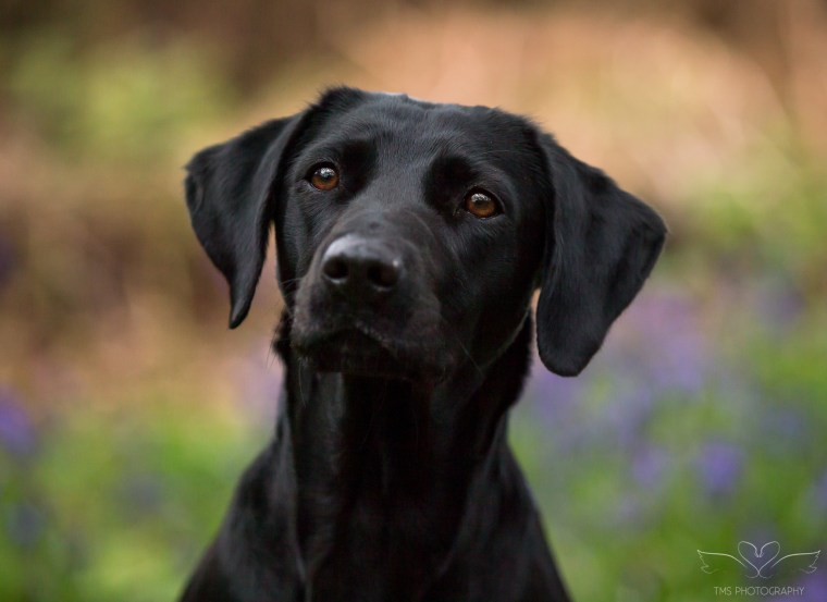 Dog_photographer_Derbyshire-19