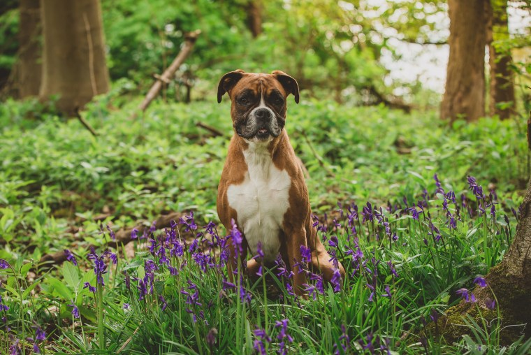 dog_photographer_Derbyshire-12